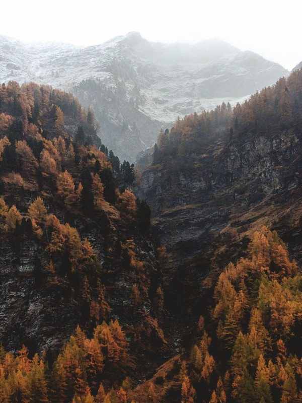 Foggy mountain with a color forest in the foreground