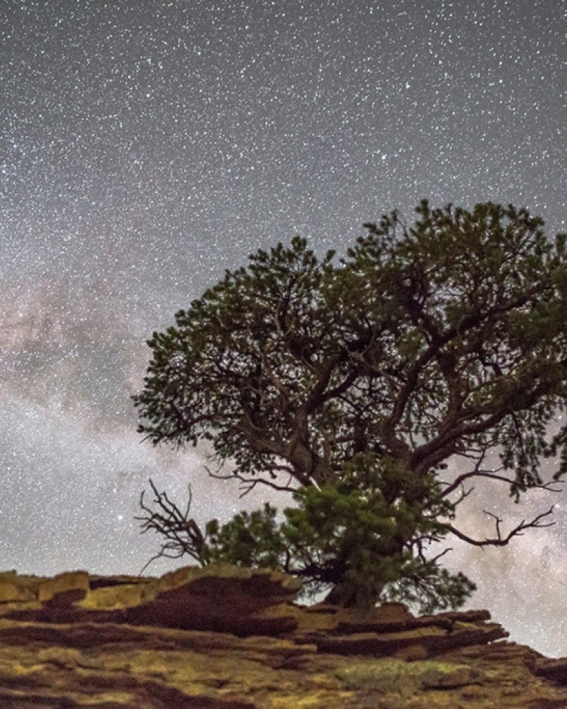 A tree with the night sky in the background