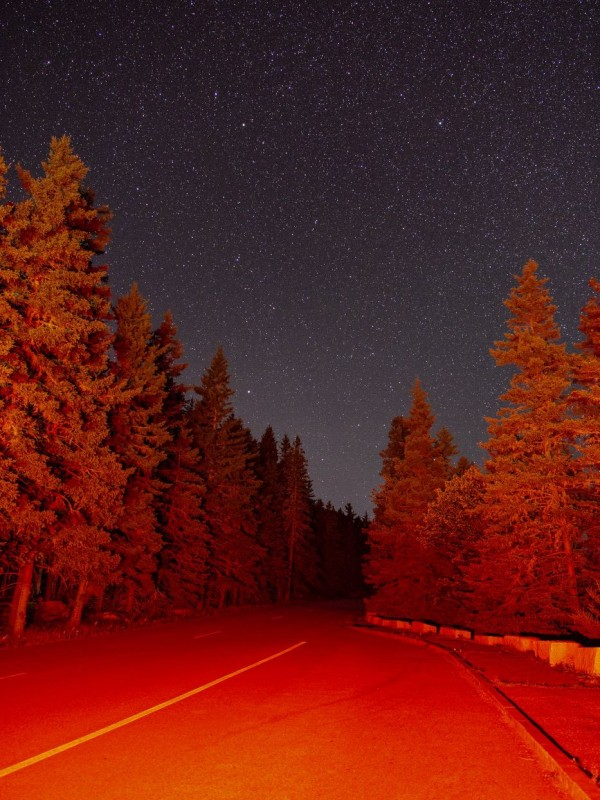 Scary forest road at night illuminated by break lights